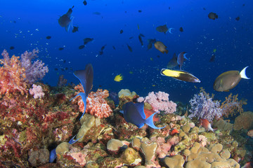 Colourful Coral Reef underwater