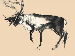 Drawing on paper of deer on monochrome background