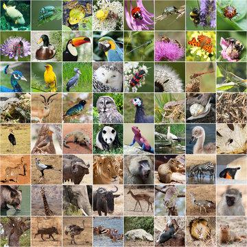 Wildlife collage