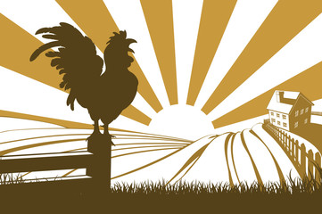 Silhouette cockerel crowing on farm