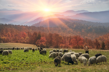 Wall Mural - Transcarpathian pastures in autumn