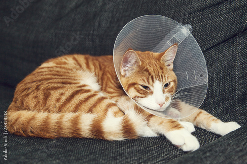 How long to keep cone on cat after spaying