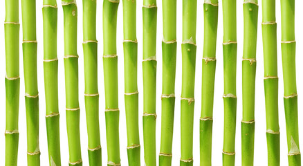 Green bamboo stems isolated on white background
