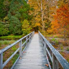 Wooden bridge over creek in autumn forest.