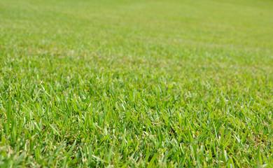 fresh grass for background