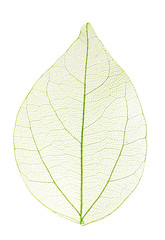 Zelfklevend Fotobehang Decoratief nervenblad Decorative skeleton leaf isolated on white