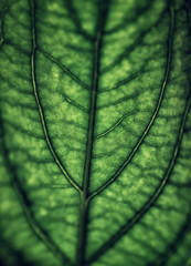 Green leaf background