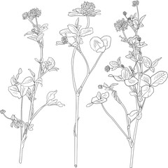 Set of line drawing clovers