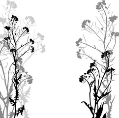Silhouette of herbs and flowers