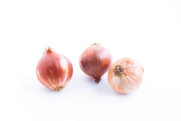 Onion on white background.