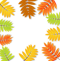 background for a design with the autumn leaves of wild ash