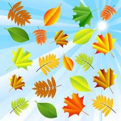 background for a design with autumn leaves