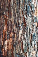Tree Bark in Sunlight time passing .