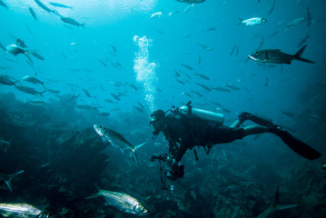 Diver and group of fishes in Derawan, Kalimantan underwater