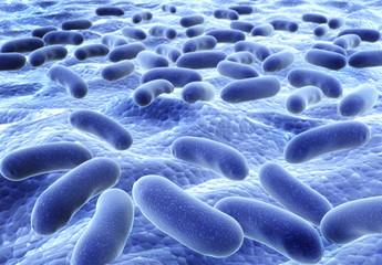 Bacteries