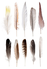 set of ten straight feathers isolated on white