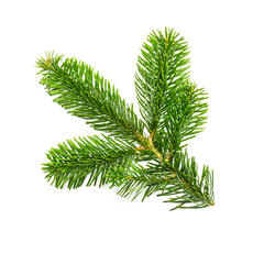 Christmas fir tree on white