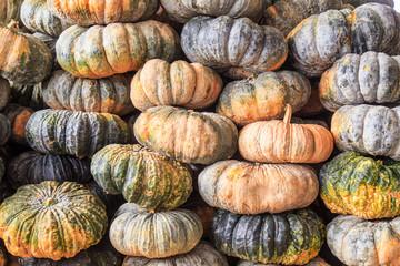 Stack of Pumpkin