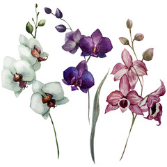 Beautiful orchid flower3