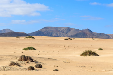 Sand dunes in Corralejo National Park, Fuerteventura island