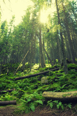 Sun shine in summer forest. Natural background