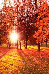 Foto op Aluminium Herfst Sunlit Foliage Fall Wallpaper
