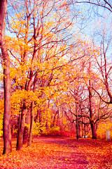 Garden Poster Fall Wallpaper Autumn Leaves