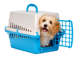 Cute happy havanese puppy dog is looking out from a pet crate