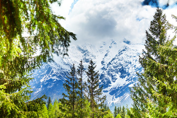 Wall Mural - Mont Blanc, Alps view through fir-trees