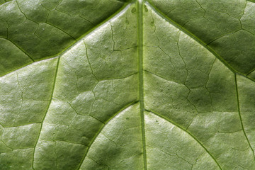 Green Leaf Texture Background Pattern