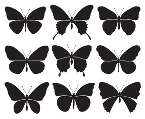 monochrome set of different butterflies