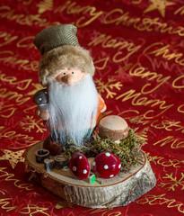 Weihnachts  Wichtel auf Baumscheibe