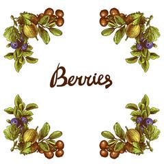 Sketch berries frame