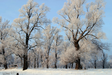 a long walk in nature snowy Russian winter