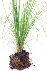 green grass with soil isolated on white background