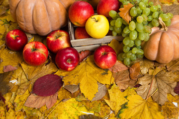 fruits and vegetables on autumn leaves