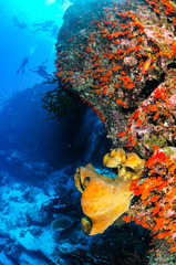 Divers and sponges in Banda, Indonesia underwater