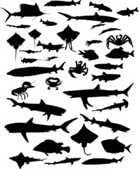 large set of fish silhouettes isolated on white