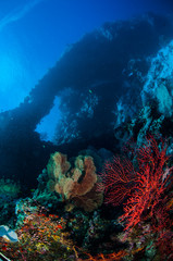 Sea fan Melithaea, sea fan Subergorgia in Banda underwater