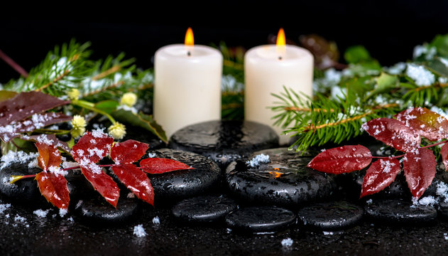 winter spa concept of evergreen branches, red leaves with drops,