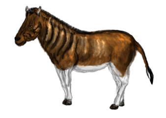 Fototapeta equus quagga quagga