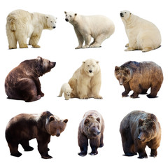 Set of polar and brown bears over white
