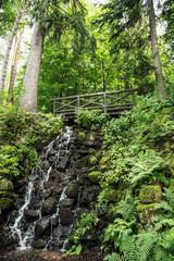Wooden bridge and waterfall with fern plants in european forest
