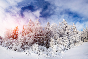 beautiful tree in the snow on a sunny winter day