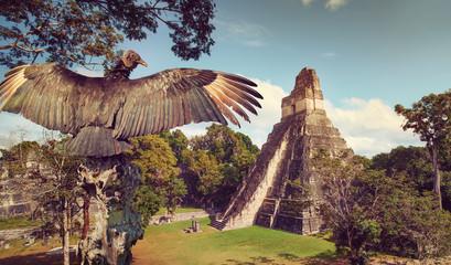 Neophron looking at the ancient ruins of Mayan city Tikal