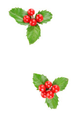 European Holly (Ilex aquifolium) with berries, isolated on