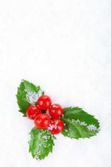 European Holly (Ilex aquifolium) with berries on snow, close up