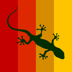 salamander on a color background