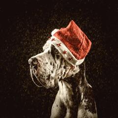 harlequin great dane form of Santa congratulates merry Christmas