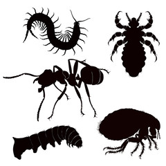 dangerous insect silhouette